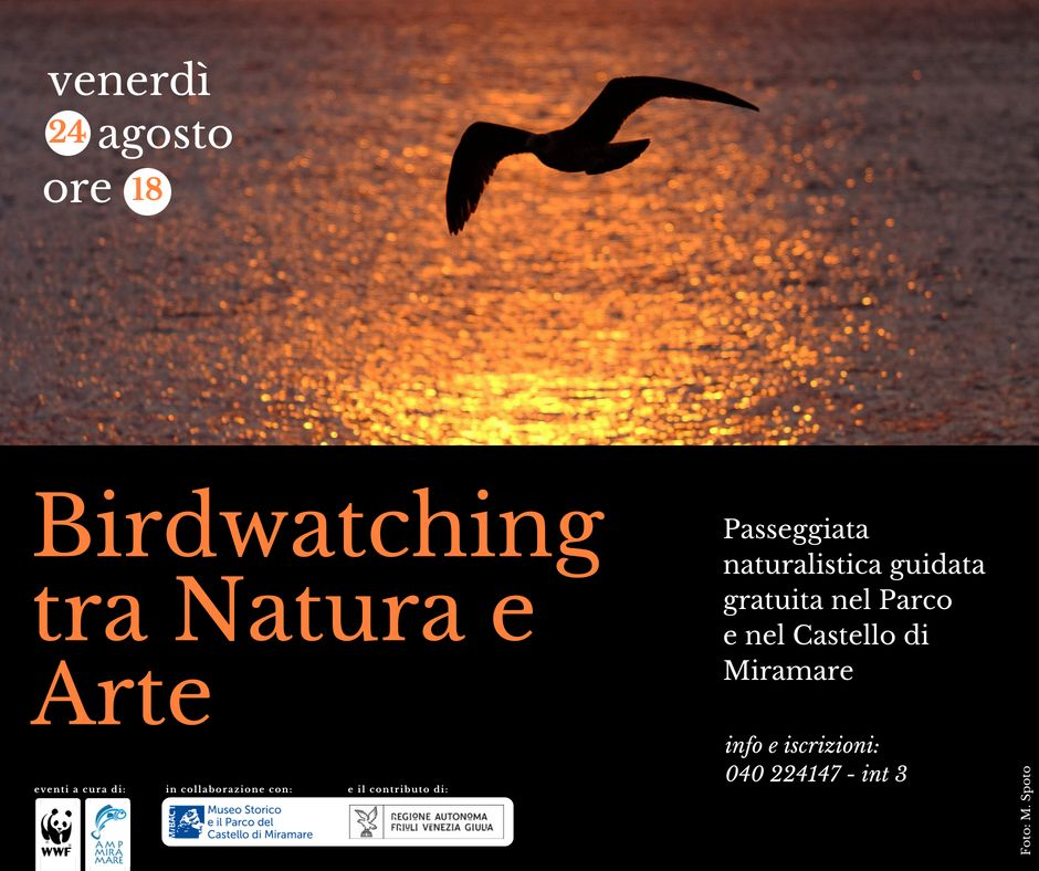 24ago birdwatching