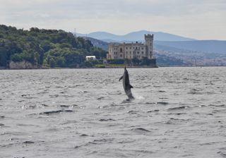 delfino 18 saul