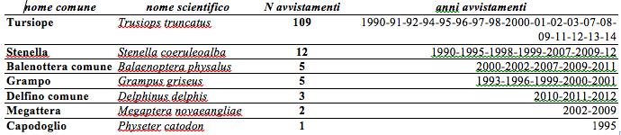 tabella cetacei