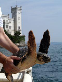 tartaruga castello