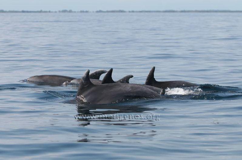 delfini morigenos