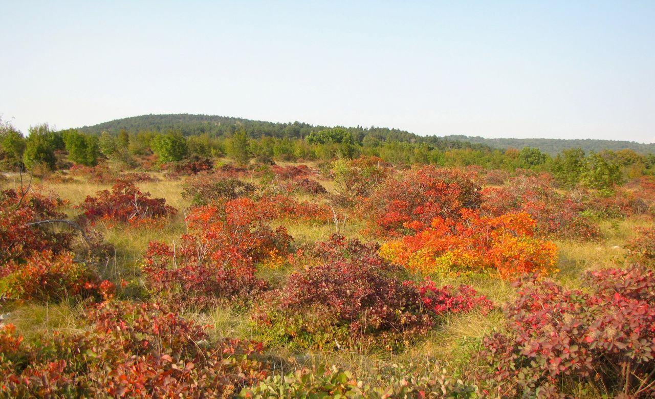 carso autunno rossi