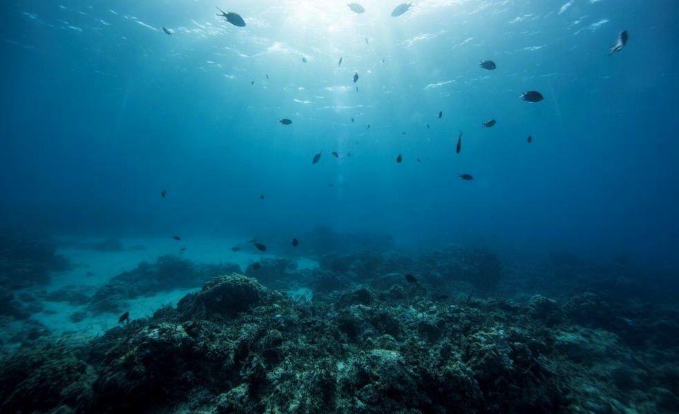 oceano wwf