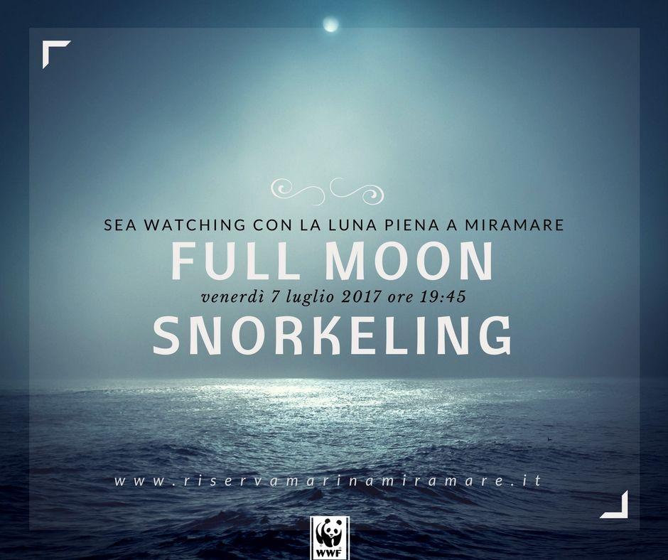 fullmoon snorkeling