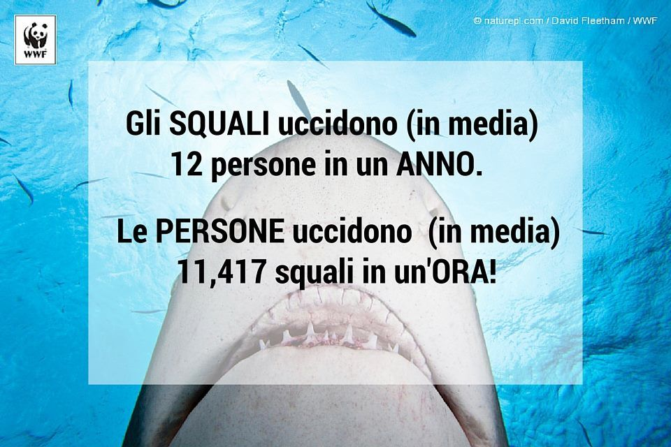 squali wwf