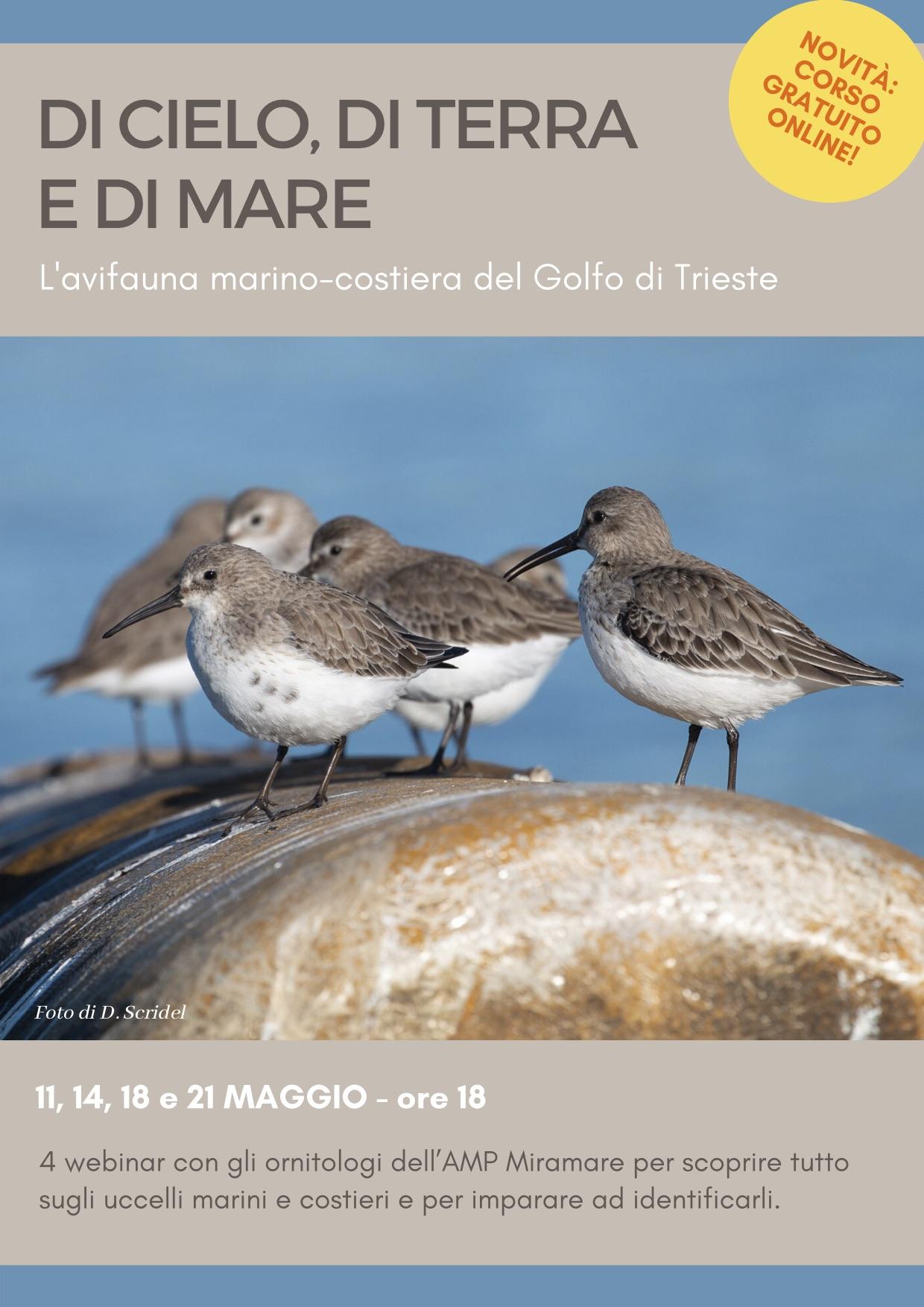 Locandina avifauna